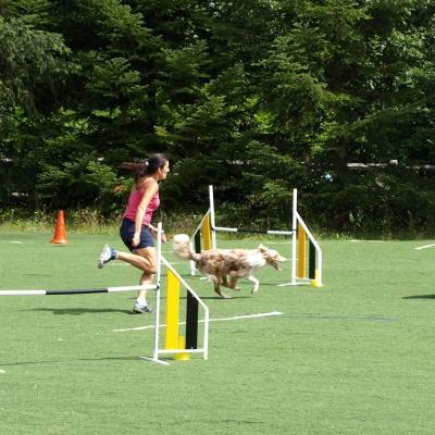 Education Canine-Agility-Hoopers 27 juin 2020
