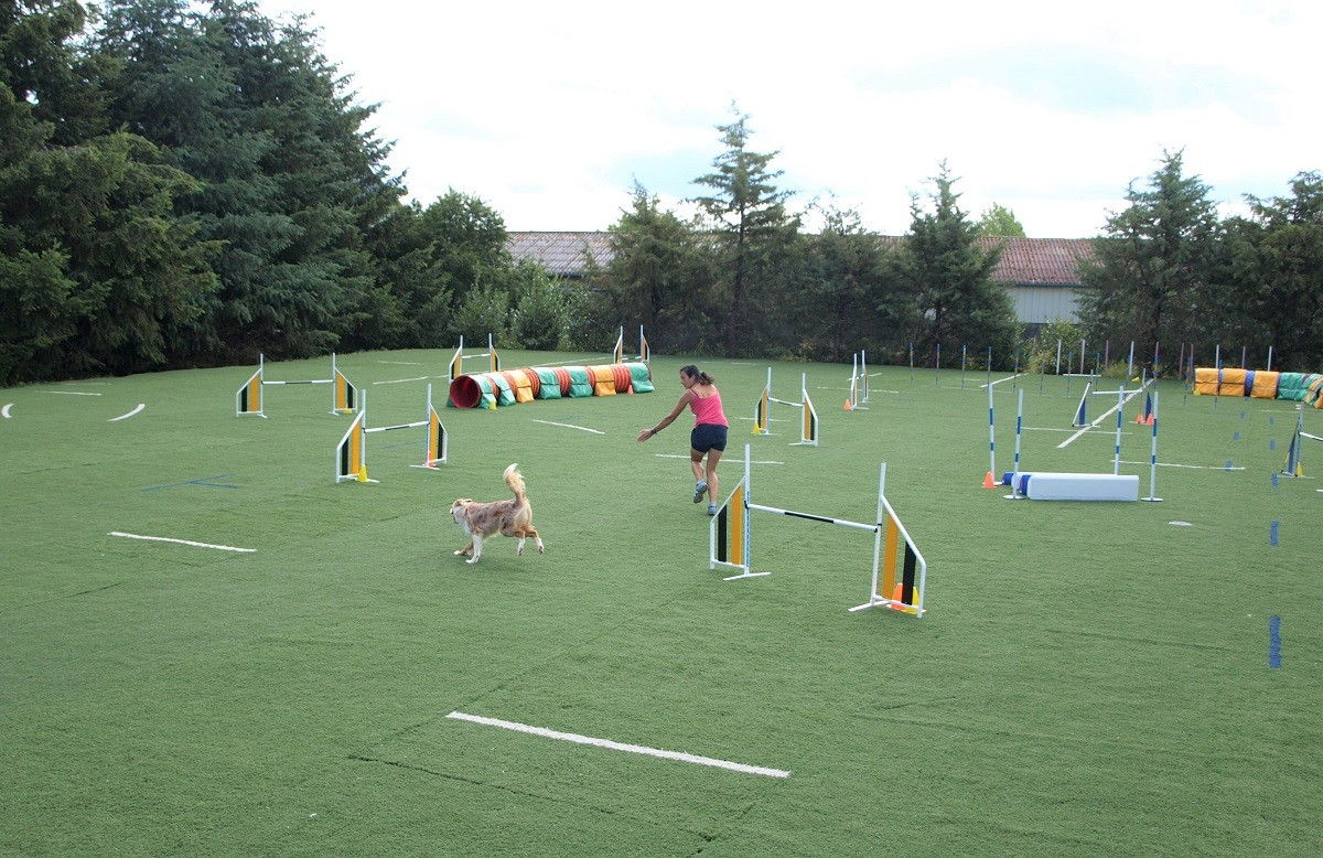 Education Canine-Agility-Hoopers 27 juin 2020
