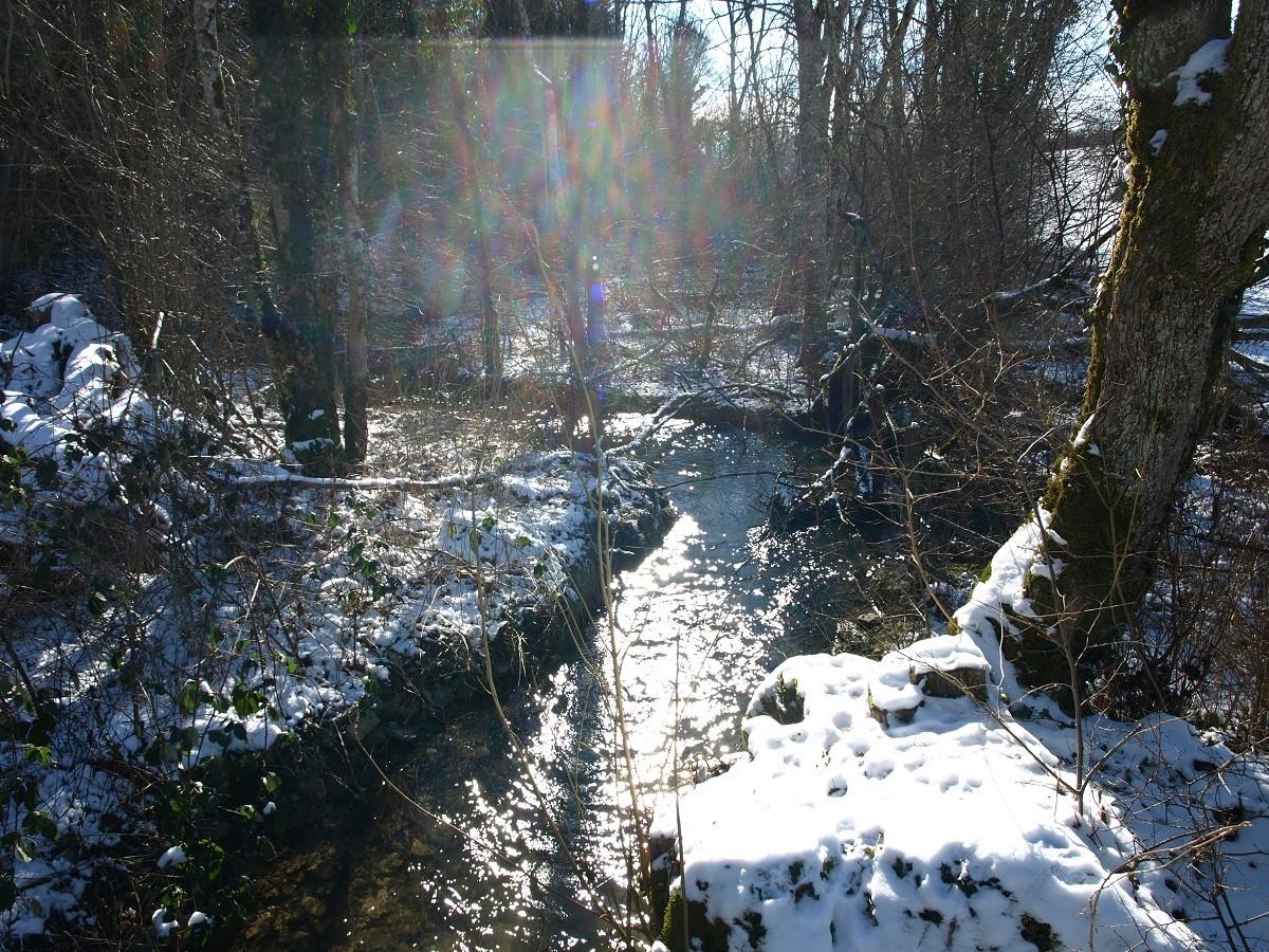 Le ruisseau des Sointures- février-2021-(-12°)